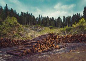 Auto de Infração Ambiental — O que Fazer Quando Receber